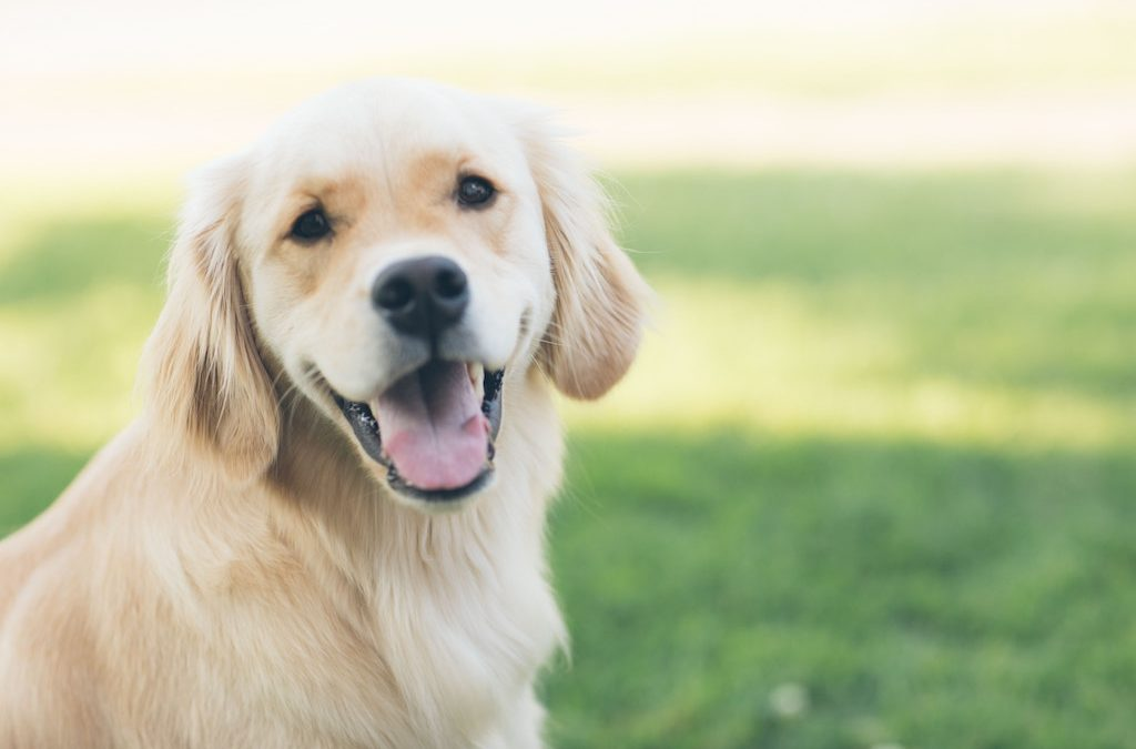 Susan Lanci – Why Dog Owners Absolutely Love Their Dogs