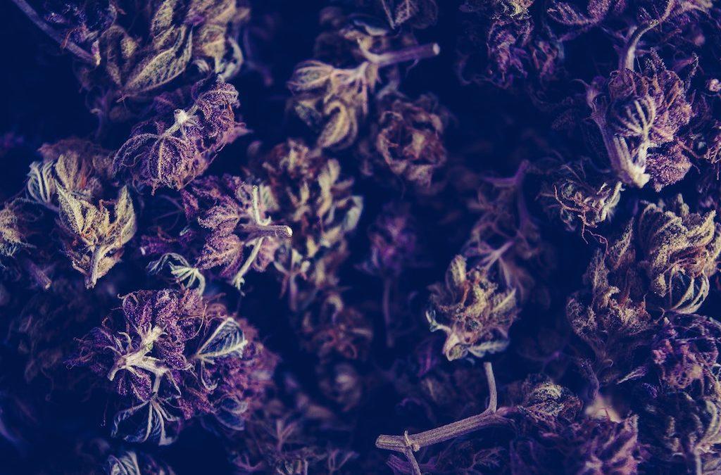 Has Los Angeles Approved For Recreational Marijuana Dispensaries?